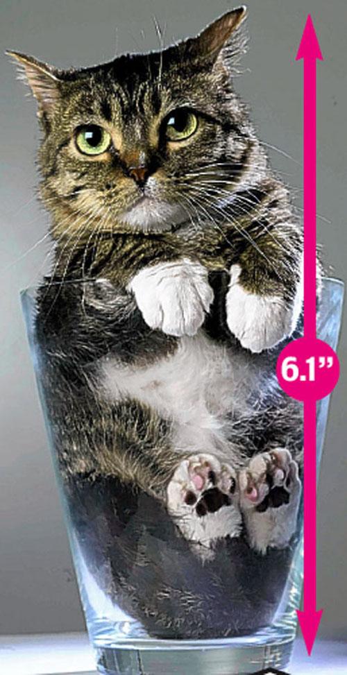 عکس هایی دیدنی از کوچکترین گربه جهان