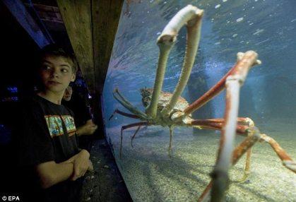 عکس هایی از بزرگ ترین و ترسناک ترین خرچنگ جهان