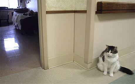 گربهای که مرگ 50 نفر را پیش بینی کرده+عکس