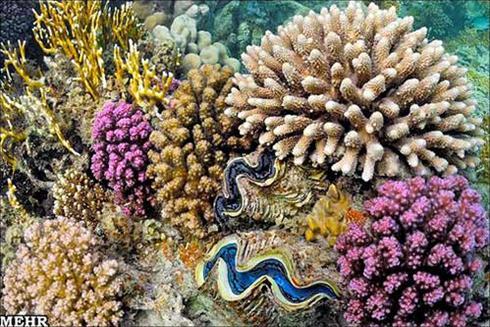 عکس هایی شگفتانگیز از غولهای اعماق دریا