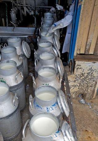 باوری خنده دار : افزایش طول عمر با شیر خر