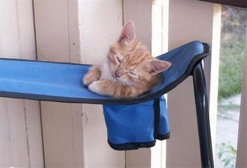 عکس هایی جالب و خنده دار از گربه های خسته