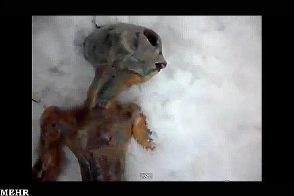 کشف جسد یک موجود فضایی در قطب+عکس