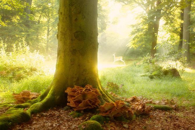 عکس های  بسیار زیبا از طبیعت اثر Lars-Van-De-Goor