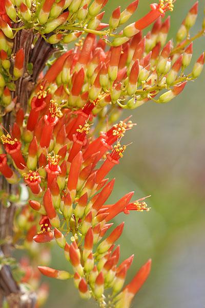 تصاویری از قدرت بی نظیر خداوند در آفرینش گل ها
