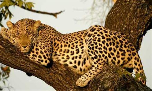 عکس های زیباترین حیوانات در حال انقراض