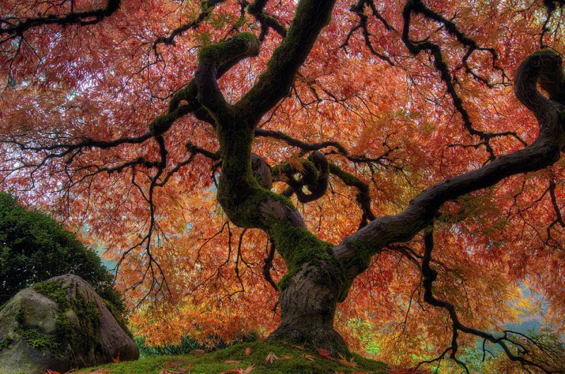 عكس های باغ هایی فوق العاده زیبا و شاعرانه