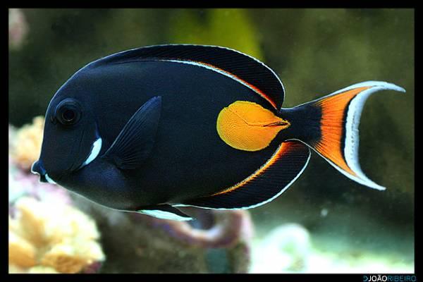 تصاویری رنگارنگ از زیبایی های طبیعت در زیر دریا
