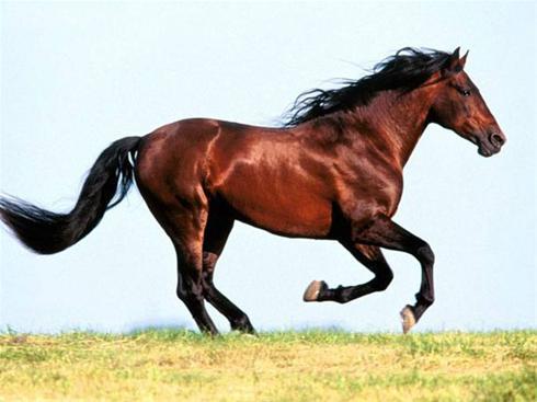 عکس هایی دیدنی از اسب های وحشی و زیبا