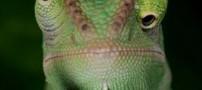 عکس هایی خنده دار از شکلک درآوردن حیوانات