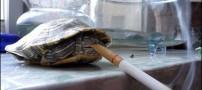 باور نکردنی اما خواندنی از لاکپشت سیگاری+عکس
