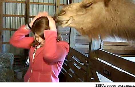 شتر در برنامه زنده موهای زن خبرنگار را خورد + عکس