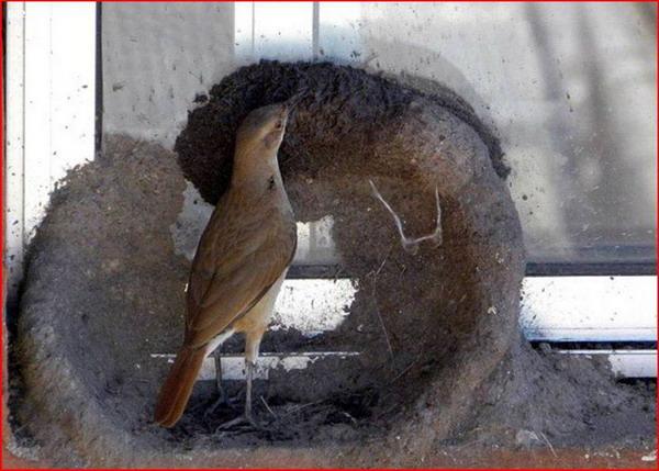 عکس هایی دیدنی از لانه سازی بسیار زیبای یک پرنده