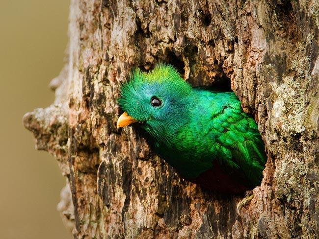 هنرنمایی بی نظیر خداوند در آفرینش پرندگان رنگارنگ