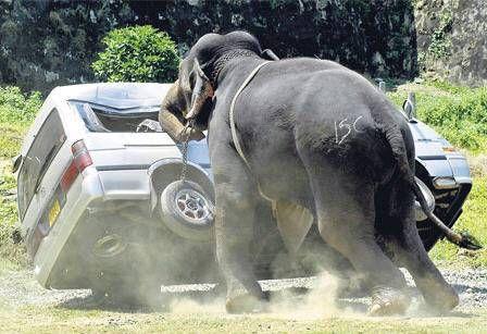 عکس هایی خنده دار از برخورد انسان و حیوان