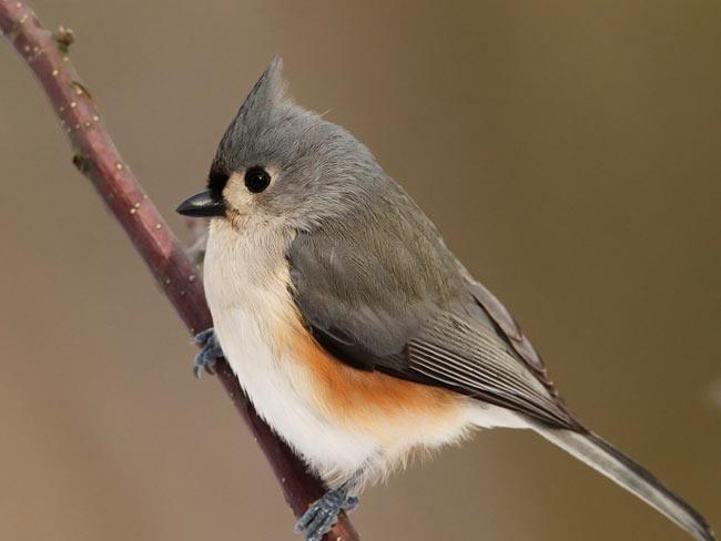 تصاویر زیبای پرندگان