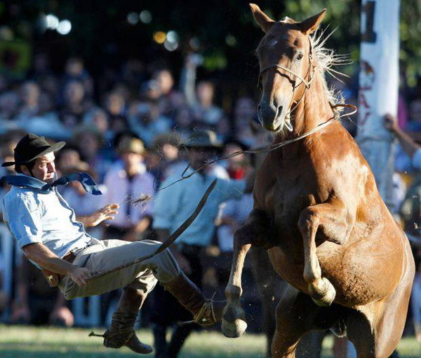 عکس هایی از مسابقات رام کردن اسب های وحشی