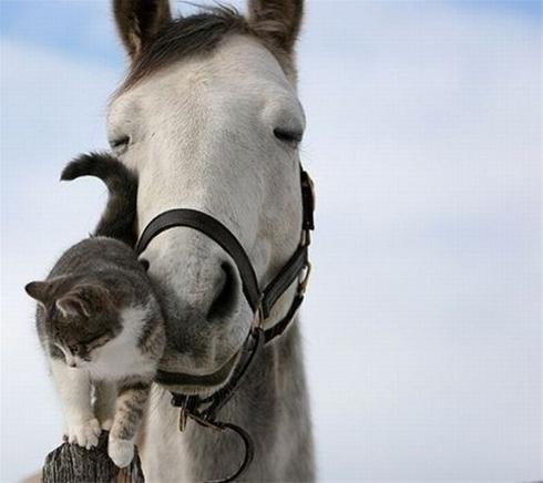 عکس هایی عاشقانه و رمانتیک از حیوانات زیبا