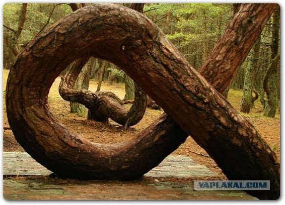 عکسهایی از جنگلی خارق العاده و تماشایی