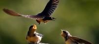 عکسهای بسیار دیدنی از دنیای حیوانات