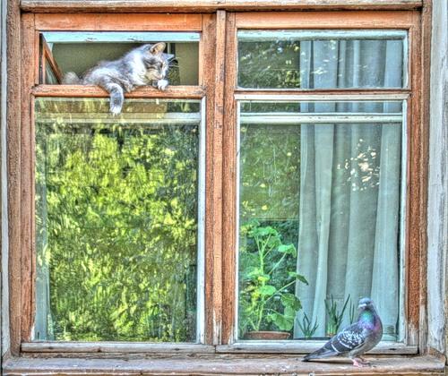 لحظه هایی از شکار کردن گربه ها