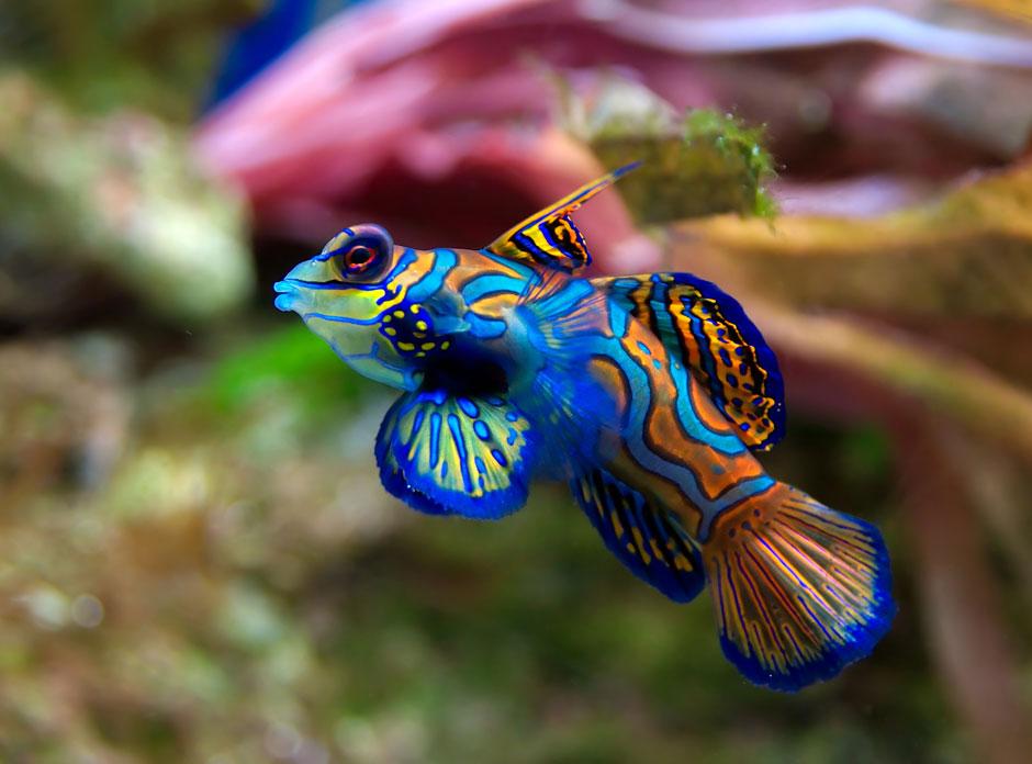 نقاشیهای زیبای خداوند (دنیای زیبای زیر آب)