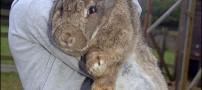 رالف، دومین خرگوش بزرگ دنیا!!