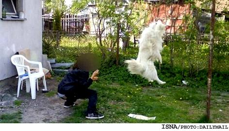 انتشار تصاویری از دار زدن یک سگ در اینترنت + عکس