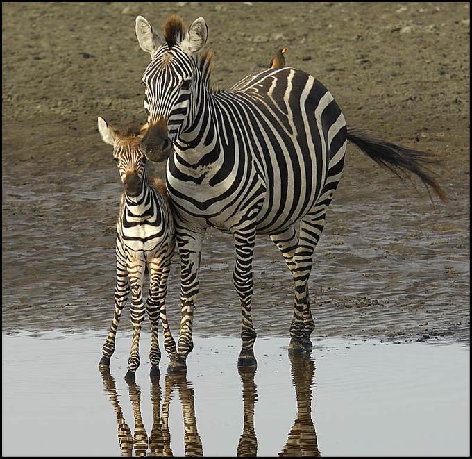 عکس هایی شگفت انگیز و زیبا از دنیای حیوانات