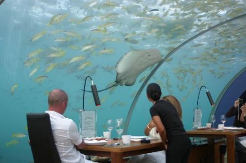 عکس هایی دیدنی از رستوران بسیار عجیب در زیر دریا