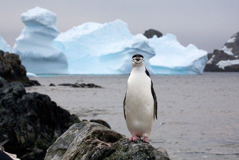 عکس هایی خنده دار و دیدنی از دنیای حیوانات
