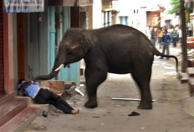 تصاویری دیدنی از لحظه کشتن یک انسان توسط فیل