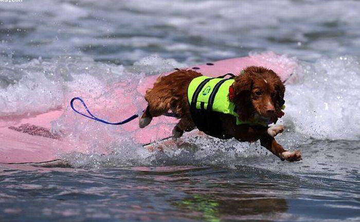 عکس هایی بامزه اسکی کردن سگ ها روی آب / www.irannaz.com