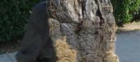 عکسی بسیار جالب و دیدنی از زشت ترین موی دنیا