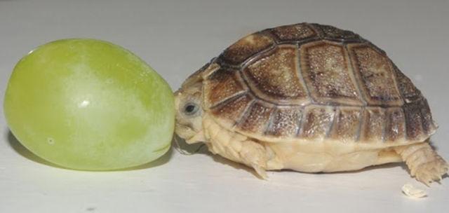 عکس های بسیار بامزه از حیوانات