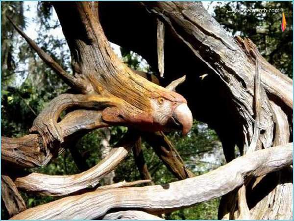 عکس هایی بسیار جالب از مجسمه سازی روی درختان