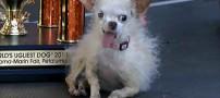 معرفی زشت ترین سگ دنیا در آمریکا + عکس
