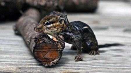 آفرین بر خالق زیبای موجودی به این مهربانی!! (عکس)