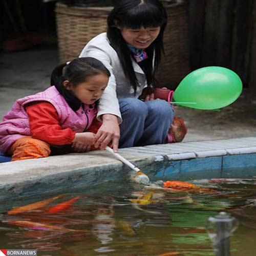 ماهی هایی که با پستانک شیر می خورند +عکس