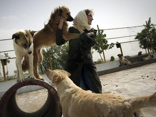 روایت خبرنگار خارجی از علاقه دختران ایرانی به سگ