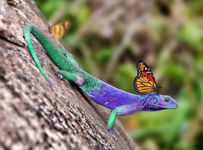 قدرت بی نظیر خدا در آفرینش طبیعت رنگارنگ (عکس)