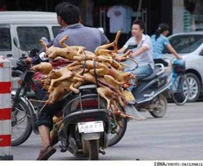 کشتن 15000 سگ برای تهیه غذا در فستیوال سگی