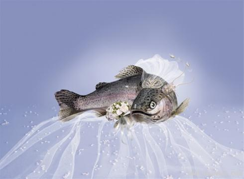 مراسم انتخاب زیباترین عروس سال ( طنز تصویری )