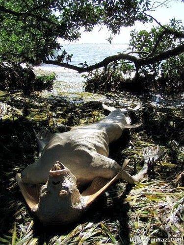 پیدا شدن یک پری دریایی زشت و وحشتناک +عکس
