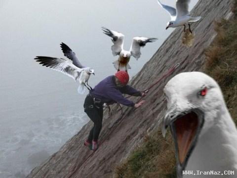 عکس هایی بسیار خنده دار و دیدنی از سراسر دنیا