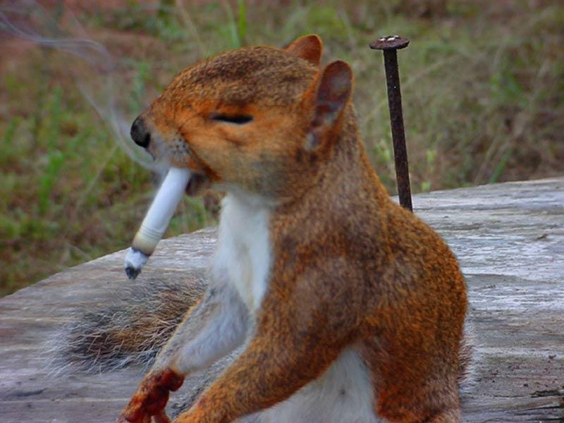موشی بامزه که عاشق و معتاد سیگار است +عکس