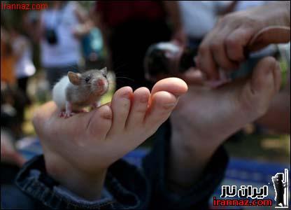 عکسهای دختری که با مار و موش خود را ماساژ میدهد!!