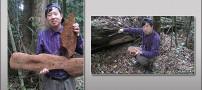 کشف بزرگترین و عجیب ترین قارچ در چین + عکس