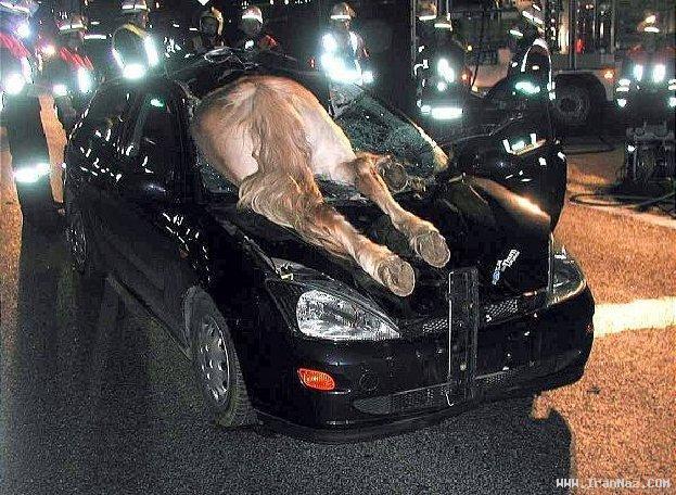 عکس هایی دیدنی از حوادث بسیار جالب و خنده دار
