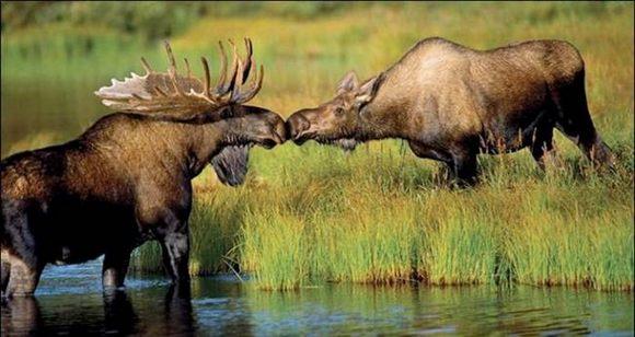 عکسهایی بسیار دیدنی از عشق بازی حیوانات